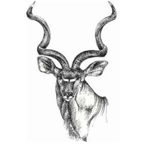Logo-Amatola Hunters & Conservation Association (EASTERN CAPE)